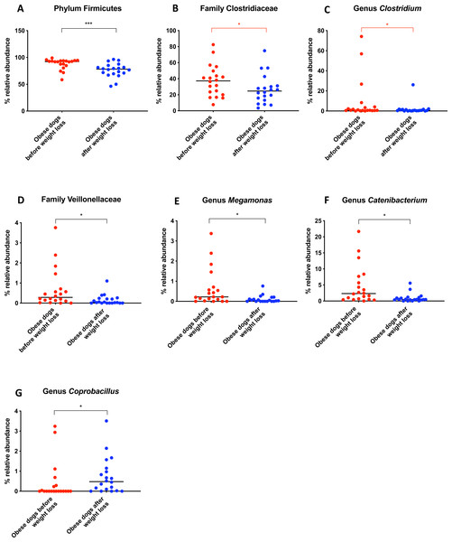 Relative abundance of bacterial populations belonging to the phylum Firmicutes detected in fecal samples of obese dogs that changed after weight loss.