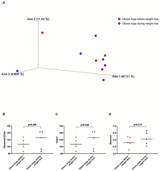 Principal coordinate analysis of beta diversity and alpha diversity indices of obese dogs that did not complete the weight loss program.