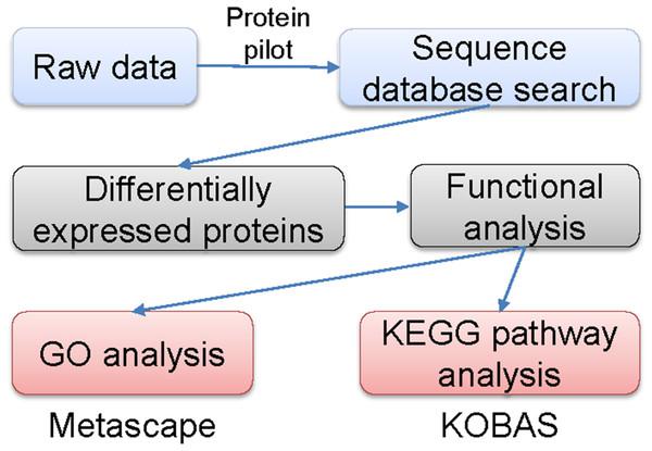 Flowchart of the data analysis procedure.