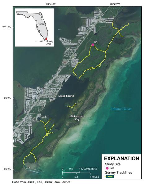Upper Florida Keys surveys around Largo Sound.