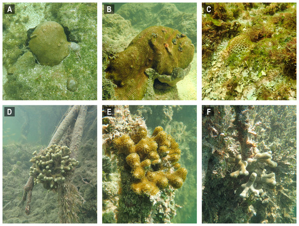 Selected images of mangrove-coral habitats in the Upper Florida Keys.