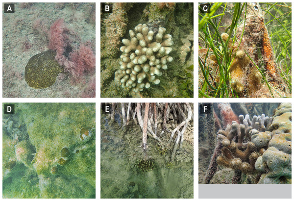 Selected images of mangrove-coral habitats in the Lower Florida Keys.
