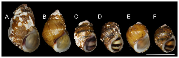 Shells of representative individuals that we sequenced.