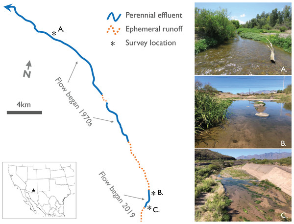 Map with photos of study sites along established and new effluent-dependent reaches of the Santa Cruz River.