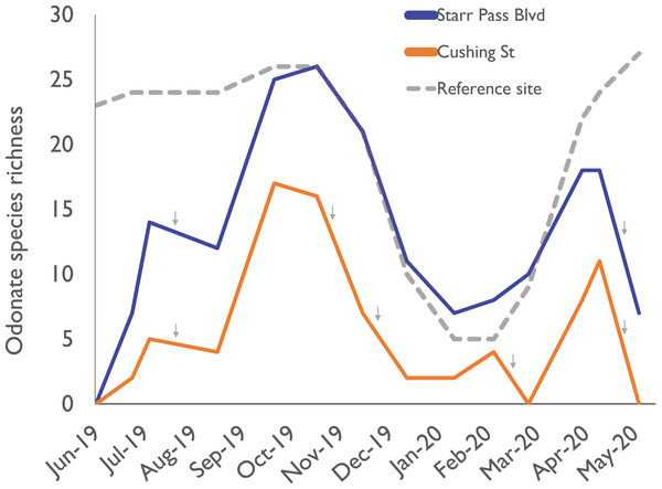 Odonate species richness across the 10-month study period at three sites along the effluent-dependent Santa Cruz River.