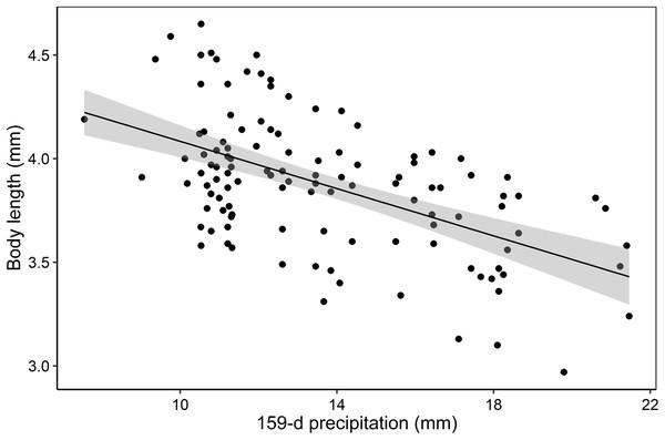 Body length variability of F. caribbianus and precipitation.