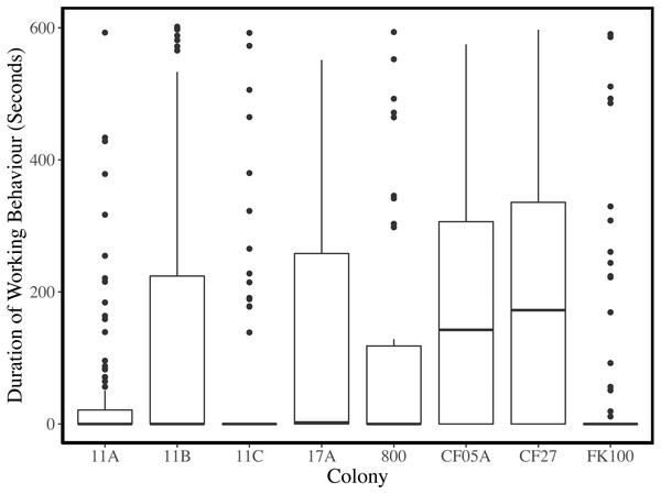 Duration of working behaviour per observation period for each colony.