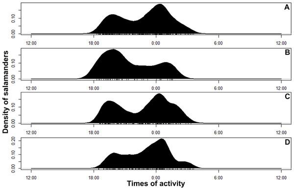 Circular kernel density models showing overall activity patterns of Bolitoglossa pandi.