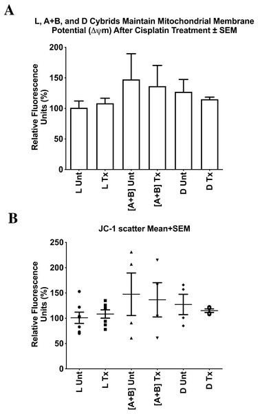 L, [A+B], and D cybrids maintained mitochondrial membrane potential (ΔΨ m) after cisplatin treatment.