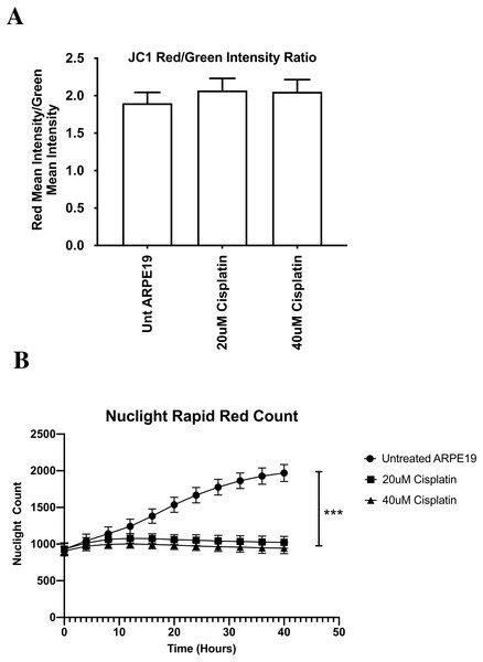 ARPE-19 Cells maintained mitochondrial membrane potential (ΔΨ m) after cisplatin treatment (Incucyte® Live Cell Analyzer).