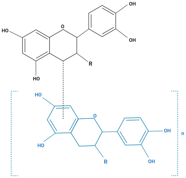The structural formula of purified grape seed oligomeric proanthocyanidins.
