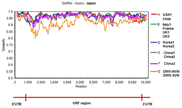 Similarity plot of the two complete DWV-VN genome sequences and other complete genome sequences (available in the GenBank database: AY292384- USA1, JQ413340- Chile, AJ489744- Italy1, KX373899- France, GU109335- UK1, KJ437447- UK2, AB070959- Japan, JX878304- Korea1, JX878305- Korea2, MF770715- China1, MF036686- China2, MH165180- China3, DWV-NVN, and DWV-SVN).
