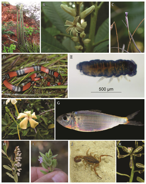 Examples of taxa included in this study.