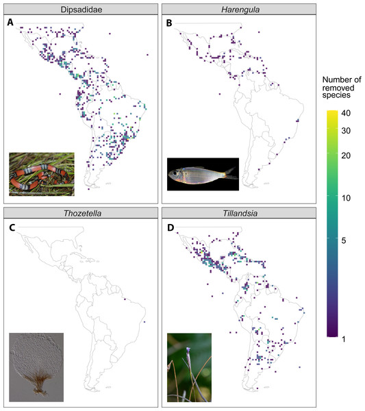 Illustrative examples of the difference in species richness between the raw and filtered dataset (raw - filtered) from four of the study taxa.