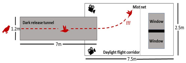 Schematic of the flight tunnel.