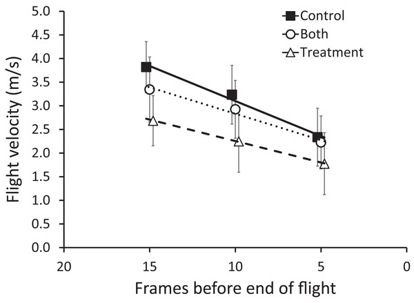 Mean (±95% CI) flight velocity across sequential five frames of flight (15–11, 10–6, 5–1, counting from the end of flight) for zebra finches.