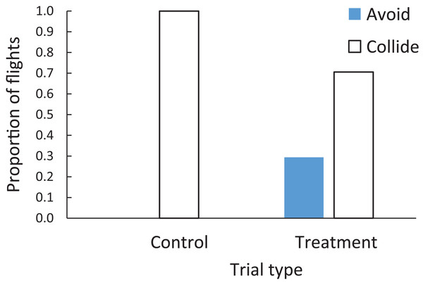 Proportion of flights when brown-headed cowbirds were adjudged to collide with windows (open bars) or avoid windows (filled bars) in either the control or treatment trials.