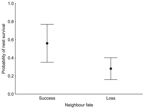Median probability of nest survival (points) with 95% Cl (whiskers) for nests for which the nearest neighbouring nest was successful (success) or depredated (loss).
