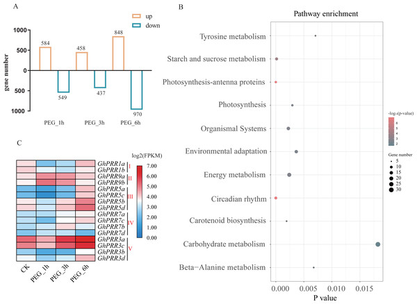 Expression analysis and KEGG enrichment of PRR genes.