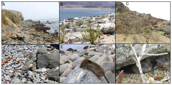 Sampling sites on islands with detected Trypanosoma cruzi hosts.