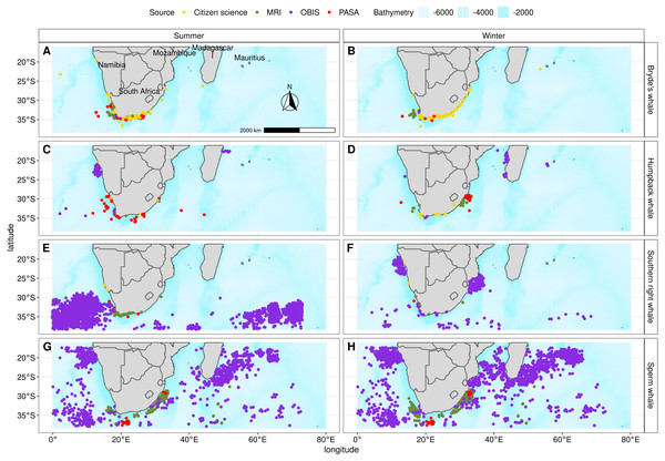 Presence points and their source for Bryde's whale, humpback whale, southern right whale and sperm whale during summer and winter that were used in the individual algorithms and the ensemble model.