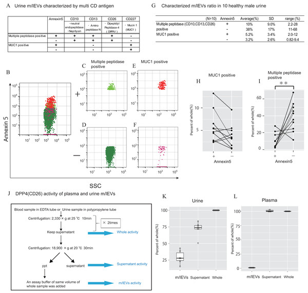 Characterization of urinary m/lEVs by flow cytometry and CD26 enzymatic activity.
