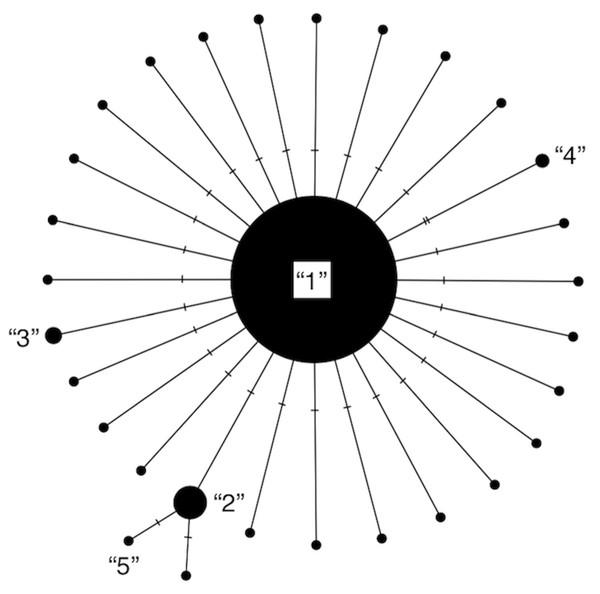 Modified haplotype network from Phillips, Gillis & Hanner (2019).