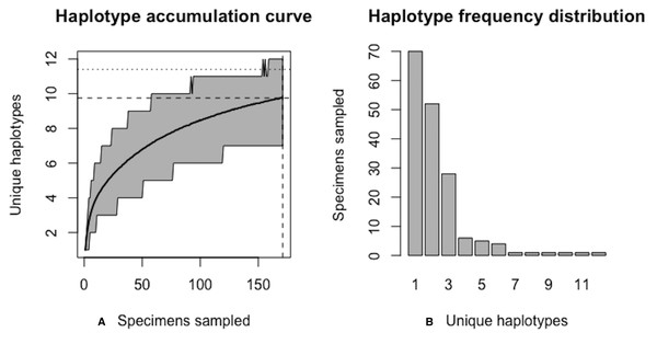 Initial graphical output of HAC.sim() for a real species (Scalloped hammerhead, S. lewini) having three dominant haplotypes.