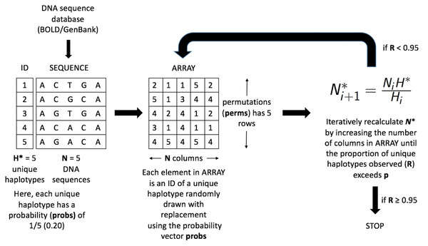 Schematic of the HACSim optimization algorithm (setup, initialization and iteration).