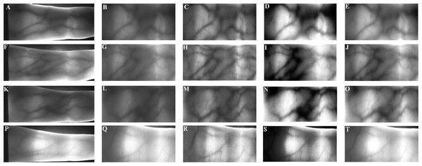 Pre-processed finger-vein image using different enhanced algorithm from the Avera databases.