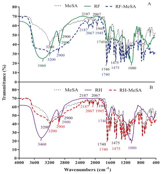 FTIR spectra of rice flour-methyl salicylate (RF-MeSA) at 24 h (A), rice husk (RH) and rice husk-methyl salicylate RH-MeSA (B) at 24 h.