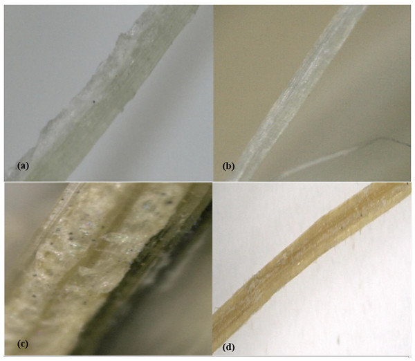 Surface imaging of the fibers.