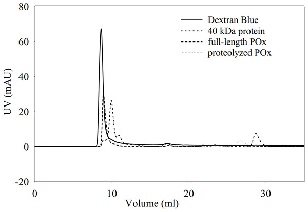 Elution profiles for dextran blue, full-length POx, proteolyzed POx after 5.5 h of trypsinolysis, and tropomodulin (40 kDa) obtained using size exclusion chromatography.
