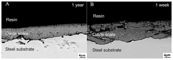 The morphology of the oxide scale observed by SEM (A) No. 1 group (B) No. 2 group (Work Distance (WD) = 12.5 mm).
