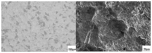 The descaling effects from the front section's scanning after the shot blasting with a large amount of abrasive of No. 1 group (A) 100 times magnification (B) 500 times amplification (WD = 16 mm).