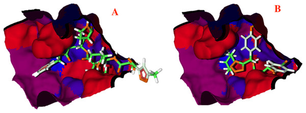 Hydrophobic interactions between the CoV-2-MPro protein and the main ligands.