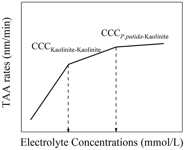 """Schematic diagram of """"kaolinite-P. putida"""" TAA rates as a function of electrolyte concentration."""