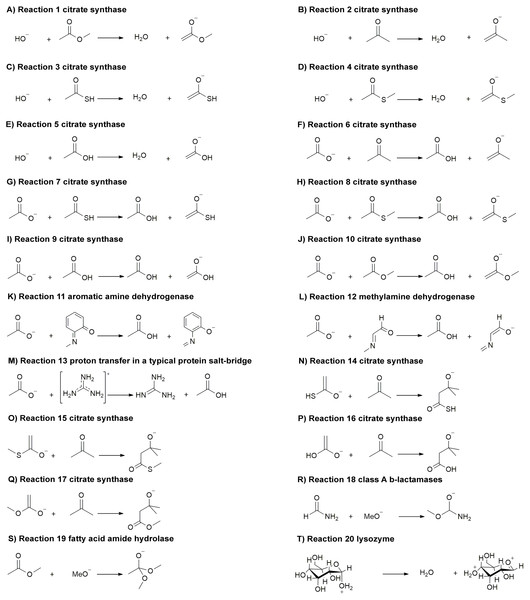 (A-T) Reactions (1–20) related to important classes of enzyme reactions.
