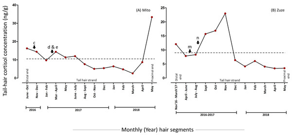 Tail-hair cortisol concentrations (hC; ng/g of manually minced hair samples) in two captive elephants of the Kyoto City Zoo and Kobe Oji Zoo.