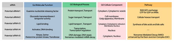 The GO terms and Reactome pathways corresponding to the most probable targets of the deigned siRNAs.