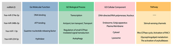 The GO terms and Reactome pathways related to the most probable targets of each candidate miRNAs from all species.