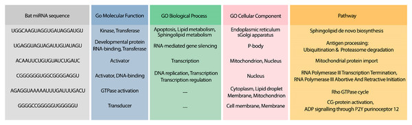 GO terms and pathways for genes targeted by candidate bat miRNAs.