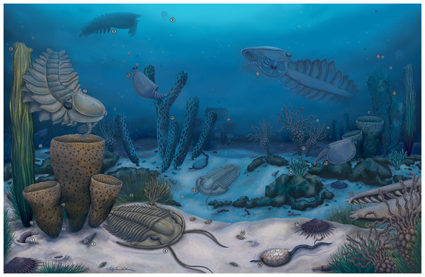 Artistic reconstruction of the Cambrian (Drumian) Marjum biota in the House Range of Utah, USA, including radiodont components.
