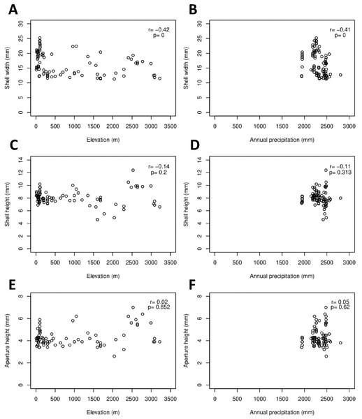 Correlations between shell quantitative traits (i.e., sizes) and environmental variables (elevation and precipitation).