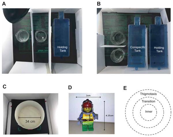 Experimental dosing and behavioural testing set-up.