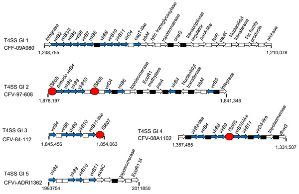 Schematics of representatives of the five types of T4SS genomic island found in CFs.