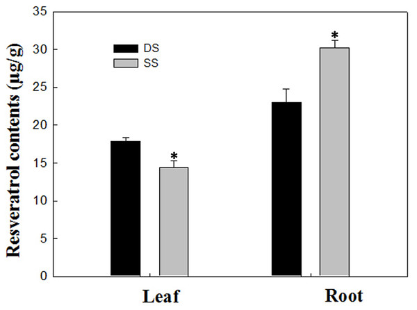 Determination of resveratrol contents according to the method detailed by Tang et al. (2010) in leaf and root between SS and DS treatments.