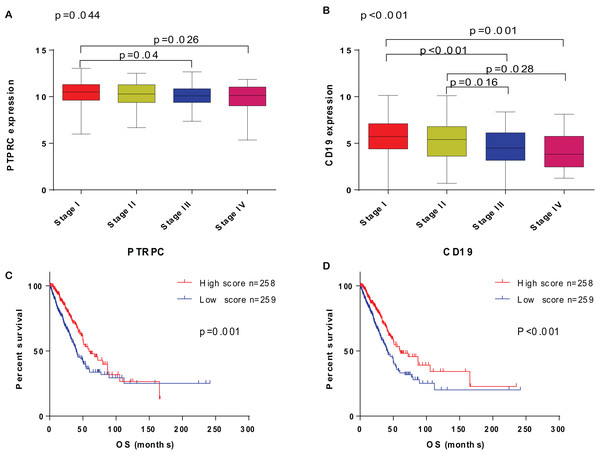 The correlation of PTPRC and CD19 with clinicopathological stage and survival of LUAD patients.