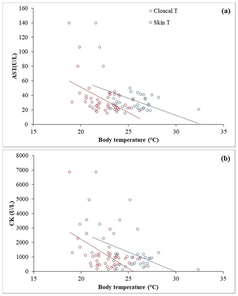 Linear correlations of skin and cloacal temperatures (°C) of the Berthold's bush anole (Polychrus gutturosus) with blood values of (A) aspartate aminotransferase (AST) and (B) creatinine kinase (CK).