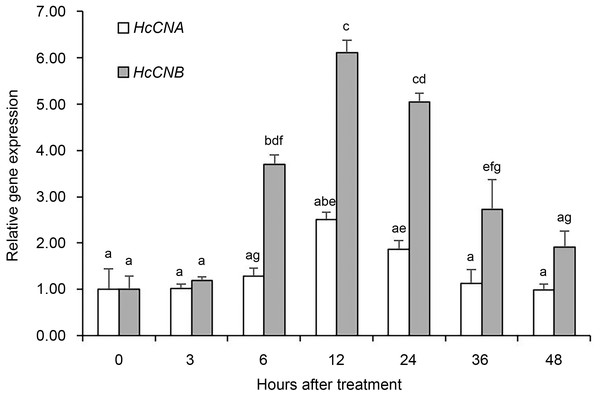 Quantitative real-time PCR analysis of HcCNA and HcCNB gene expression after shell notching.